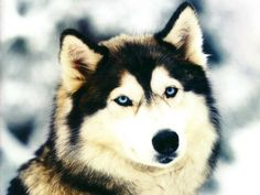 chien trop beau -