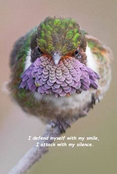 good morning friend... good night friend...  a volcano hummingbird