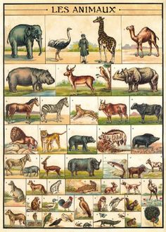 Cavallini & Co. Animal Chart Decorative Decoupage Poster Wrapping Paper Sheet Cavallini & Co.,http://www.amazon.com/dp/1619920468/ref=cm_sw_r_pi_dp_1LyYsb0AP425ZQQJ
