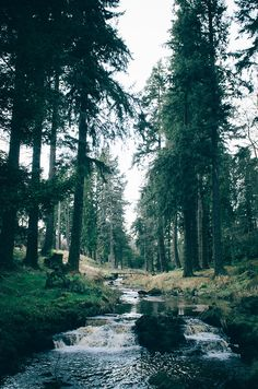 Take it to the forest in Cragside, Northumberland, England.