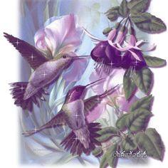 Animated Gif Birds | Animated Humming Birds - hummingbirds Photo