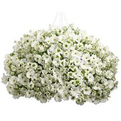 Garden Crossings offers you options for your combination container plantings. Purchase Wedding Song Combo Kit, Our Preplanted 12 Inch Hanging Basket or Design Your Own Creation.