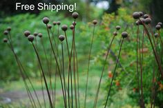 "$55.Kinetic Metal Garden Art Sculpture- Grouping of 7 -1""balls-Ball Weeds- 48"" paint berry???"