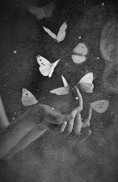 """❂ """"Looking at beauty in the world, is the first step of purifying the mind."""" I Amit Ray Papillon Butterfly, Butterfly Kisses, Butterfly Effect, Butterfly Art, Black And White Aesthetic, Black White, Dark Art, Black And White Photography, Wall Collage"""