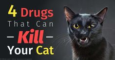 Four common substances that are highly toxic to cats include acetaminophen, phosphate enemas, Kaopectate, and antidepressants. http://healthypets.mercola.com/sites/healthypets/archive/2015/10/08/common-substances-toxic-to-cats.aspx