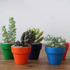 Popular Woodworking, Woodworking Wood, Plant Design, Potted Plants, House Plants, Wood Projects, Minis, Cactus, Planter Pots