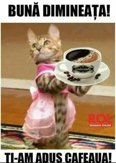 Imagini pentru cafea cu pisici