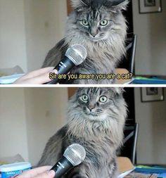 An interview to a cat.