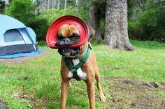 Frisbee Love