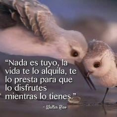 La vida es un ratico! Bible Quotes, Bible Verses, Spanish Quotes, Affirmations, Owl, Thoughts, Funny, Animals, Infinity