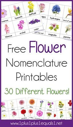 FREE Flower 3 Part Cards