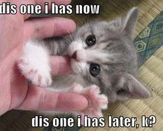 Does cat like finger ?LOL...http://goo.gl/qklGG