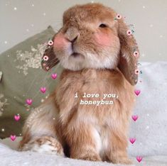 new ideas for pet rabbit breeds overlays 100 Memes, Funny Memes, Wallpaper Bonitos, Baby Animals, Cute Animals, Flirty Memes, Wholesome Pictures, Rabbit Breeds, Heart Meme