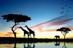 Reflections in Africa - unreal silhouette shot