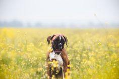Mariiana Capela photographer Portugal Dog photography