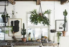 Los geht's Sommer – mit Madam Stoltz. Hanging Plants, Indoor Plants, Interior Design Singapore, Deco Boheme, Blog Deco, Deco Design, Green Life, Little Houses, Scandinavian Style