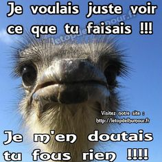 Emoji Triste, French Quotes, Blog Tips, Caricature, Cool Words, Funny Animals, Funny Pictures, Jokes, Lol