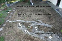 Water-harvesting: capture the stormwater that would normally run off your property and instead, store it in the soil.