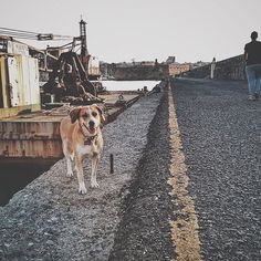 New phone's camera, test. Soti #puppy #dog #harbour #running #port #walking#around #heraklion #crete #greece #instagreece #igdaily #tedxanogeia #vsco #vscocam #vscolife #vscoapp #snapseed #instalife #ig_greece