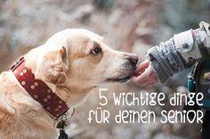 5 wichtige Dinge im Leben eines alten Hundes Was solltet ihr alles beachten, wenn ihr einen älteren Hund an der Seite habt? Doggy Fitness hat euch einige Tipps zusammengetragen.