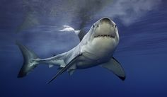 15. Sharks - 6 deaths a year Shark attacks are pretty rare. In 2014,there…