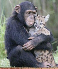 Забота Смешные животные.Funny Animal