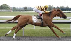 Wise Dan easily wins USA horse of the year for 2012. Late bloomer Wise Dan has been named the United States Horse of the Year, easily beating I'll Have Another for the title.    The five-year-old, winner of five of his six starts in 2012, became the first gelding to win the title since John Henry in 1984.    His major wins were the Breeders' Cup Mile in course-record time and two other Group One turf races.