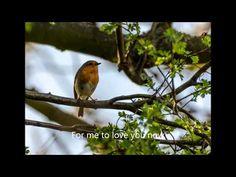 Catch the Wind,  Donovan.  with lyrics - YouTube