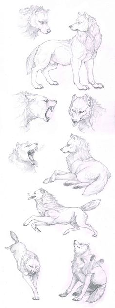 White wolf skechts by Anisis on DeviantArt
