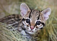 Vetstreet's 10 Cutest Baby Animals of 2013