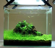 cute and unique tank aquarium design to beautify in the room , Betta Aquarium, Aquarium Aquascape, Betta Fish Tank, Planted Aquarium, Nature Aquarium, Aquascaping, Unique Fish Tanks, Cool Fish Tanks, Aquarium Design
