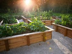 I like the design of the raised bed boxes. The Hampton Garden - traditional - landscape - portland - Rob Kyne Raised Vegetable Gardens, Vegetable Garden Design, Diy Garden, Garden Boxes, Dream Garden, Home And Garden, Raised Gardens, Wooden Garden, Herb Garden