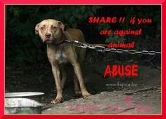 Do not abuse animals.