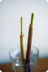 17 Plants You Grow from Kitchen Scraps |  Growing Lemongrass (nature made mosquito repellent)
