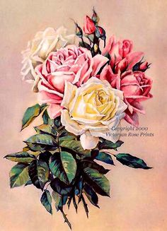 PRINT FREE SHIP French Favorites Roses Paul by VictorianRosePrints, $12.99