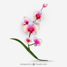 orquidea vintage - Buscar con Google