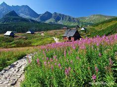 Tatra Mountains, Krakow, Warsaw, Teak, Roots, National Parks, Explore, Nature, Travel