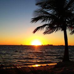 Miami - Florida - Palm Tree - Travel  - Expat