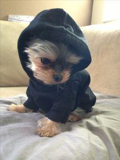 Love his little hoodie!  ♥