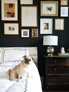 Pug in bedroom with gallery wall
