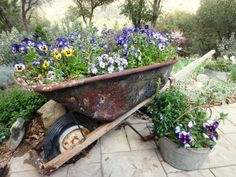 Before and after… junk gardening at it's best, I think…  I sure am getting a kick out of these violas this Spring.  'Blueberry Thrill', they're called.  The wheelbarrow we found out on a back road,…bullet hole drainage works, I guess…