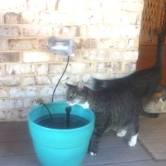 DIY pet water fountain - use small pond water pump and a planter without a hole in the bottom.