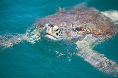 Los Roques - Crasquí. Venezuela. Es muy posible que veas a las tortugas marinas en este cayo.