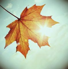 I hope I can be the autumn leaf,   who looked at the sky and lived.   And when it's time to leave,  gracefully it knew life was a gift.