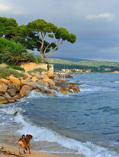 La Ciotat ~ Provence, France (Beach for dogs)