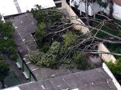 Aulas são suspensas após queda de árvore sobre escola municipal em MG