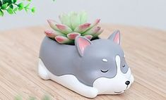 A sleepy husky planter who has been napping for so long, they have a succulent growing out of their back. Plant Magic, Fake Plants, Piggy Bank, Your Dog, Succulents, Cool Stuff, Stupid Stuff, Make It Yourself, Cute