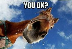 Here are the best funny horse memes all in one place. If you know someone horsey, share it with them! The best funny horse memes online. Funny Horse Memes, Funny Horses, Funny Animal Memes, Cute Funny Animals, Funny Animal Pictures, Funny Cute, Funny Memes, Horse Humor, Cowboy Humor