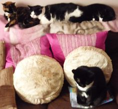 A Rare Family Portrait of my 4 Kitties Rosie (the Tabbie) Harry then Daisy his Sis an Poppy at the front MEeeeeeeeee