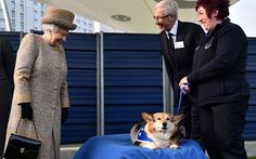queen with a stray corgi namee beama when she opened a new wing at battersea dogs home